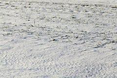 用雪盖犁了地球 库存图片