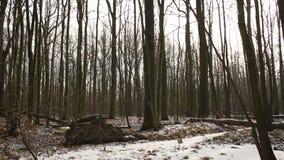 用雪盖的不可思议的风景洪泛区森林在冬天, Poodri风景,保护了风景区域,非常好 股票录像
