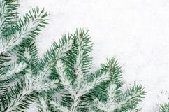 用雪盖的云杉的枝杈 免版税库存照片
