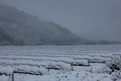 用雪盖的光致电压的模块 图库摄影