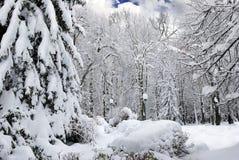 用雪盖的冬天树在森林里。 免版税库存照片