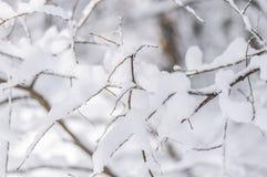 用雪盖的分支灌木在早晨森林冬天寒冷天 免版税图库摄影