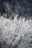 用雪盖的叶子 图库摄影