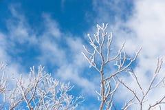 用雪盖的叶子 免版税库存照片