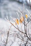 用雪盖的叶子 免版税图库摄影