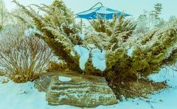 用雪盖的大常绿植物 图库摄影
