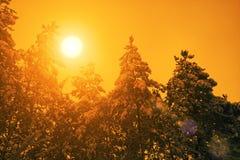 用雪盖的杉木森林 库存照片