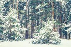 用雪盖的杉木森林 免版税库存照片