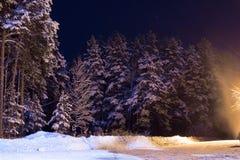 用雪盖的杉树在森林 库存图片