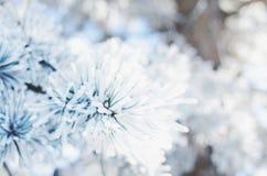 用雪盖的杉树枝杈,冬天背景 库存图片