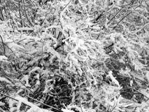 用雪盖的树分支在暴风雪以后 免版税库存照片