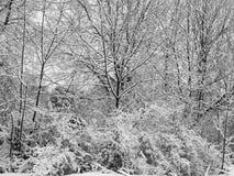 用雪盖的树分支在暴风雪以后 库存图片