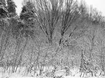 用雪盖的树分支在暴风雪以后 库存照片
