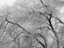 用雪盖的树分支在暴风雪以后 免版税图库摄影