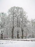 用雪盖的树在公园 免版税库存照片