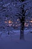 用雪盖的树在冬天微明, Ada湖,贝尔格莱德 库存图片