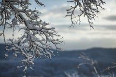 用雪盖的树早午餐在冬天 免版税库存照片