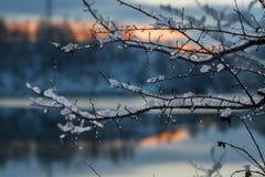 用雪盖的树稀薄的分支  免版税库存照片