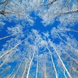 用雪盖的树 免版税库存图片
