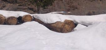 用雪盖的森林日志 免版税库存照片
