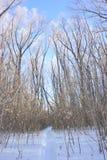 用雪盖的植物,鄂木斯克地区 图库摄影