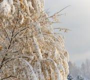 用雪盖的秋天树 库存照片