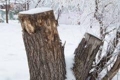 用雪盖的老树桩在冬天森林,公园里在一冷的天 库存照片