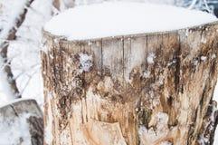 用雪盖的老树桩在冬天森林,公园里在一冷的天 免版税库存图片
