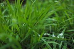 用雪盖的草坪 图库摄影