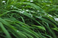 用雪盖的草坪 免版税库存图片