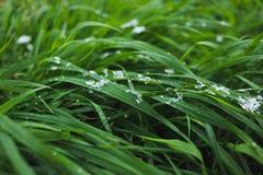 用雪盖的草坪 库存图片
