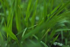 用雪盖的草坪 库存照片
