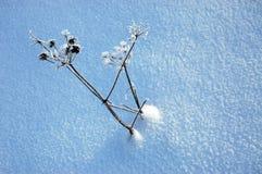 用雪盖的蓟 免版税图库摄影