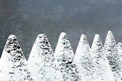 用雪盖的赤柏松锥体 库存图片