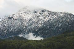 用雪盖的金牛座山的绿色倾斜 免版税库存照片
