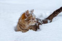 用雪花猫盖的画象  库存照片