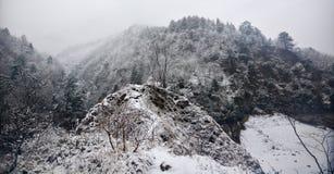 用雪薄层盖的森林  库存图片