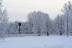 用雪andh鹳巢盖的冬天森林 免版税库存图片