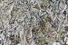 用霜和叶子盖的棍子、草 库存照片