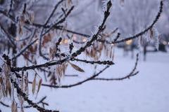用霜报道的分支在结冰的冬日 免版税库存图片