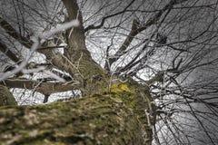 用霜报道的树枝 库存图片
