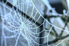 用霜报道的蜘蛛网 免版税库存照片