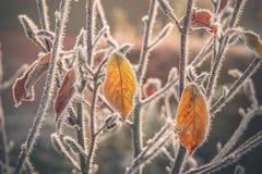 用霜盖的五颜六色的叶子 图库摄影