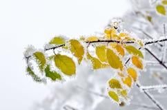 用霜盖的叶子在冬天森林 免版税图库摄影