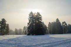 用霜盖的树在一个多雪的森林里 免版税图库摄影