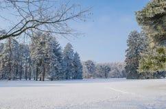 用霜盖的树在一个多雪的森林里 图库摄影