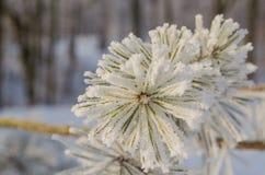 用霜盖的树在一个多雪的森林里 免版税库存照片
