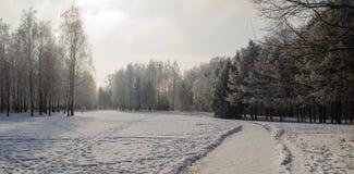 用霜盖的树在一个多雪的森林里 库存图片