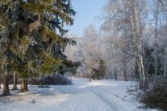 用霜盖的树在一个多雪的森林里 库存照片