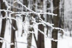 用霜盖的树小树枝 免版税库存图片